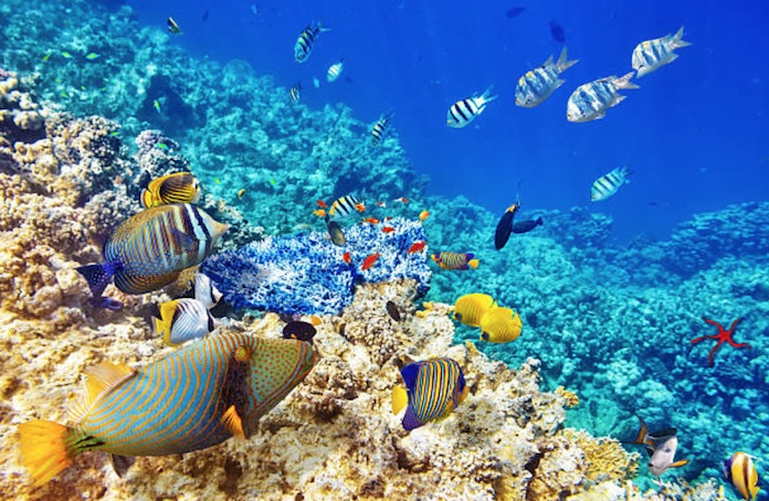 lune de miel aux Maldives, voyage de noces, mariage