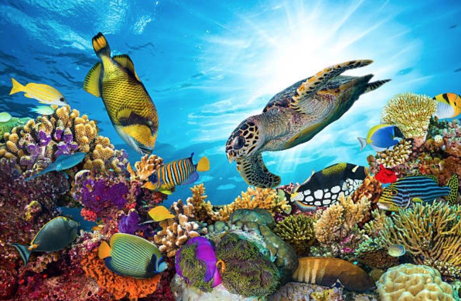 lune de miel aux Maldives, plongée sous marine